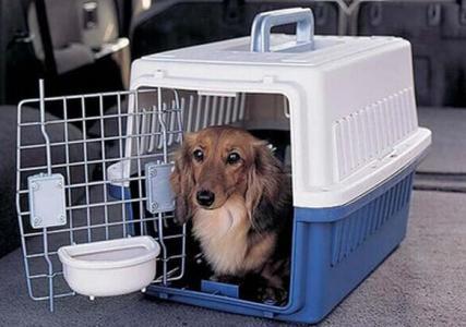 宠物航优游托运